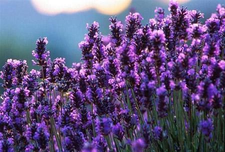 世界上最美的花排名
