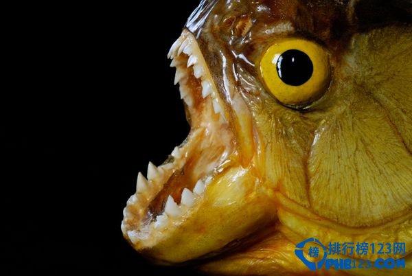杀人无形 揭秘全球最恐怖的淡水动物