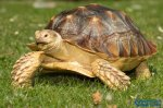 地球上寿命最长的七种动物是什么?