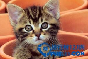 【茶杯猫图片】茶杯猫图片大全 揭秘茶杯猫寿命,特性