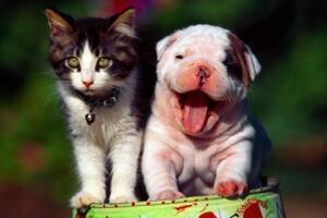 世界上最温顺的动物,最温顺的动物排名