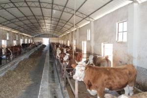 农村养殖什么项目好?2017农村养殖项目排行榜