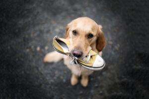 狗狗名字大全 洋气的小狗中英文名字大全