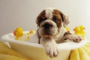 什么宠物沐浴露好,十大宠物沐浴露品牌排行榜