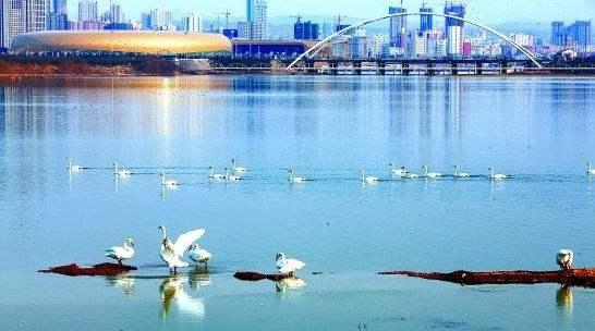2017三门峡市各区人口数量排行榜,历年三门峡市人口数量排行榜