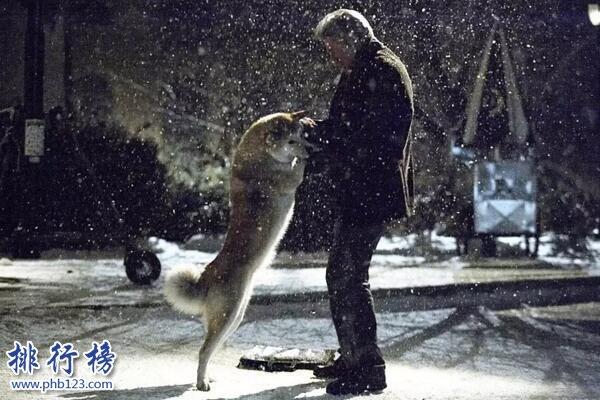 动物电影排行榜前十名 看完泪腺失控养人不如养条狗