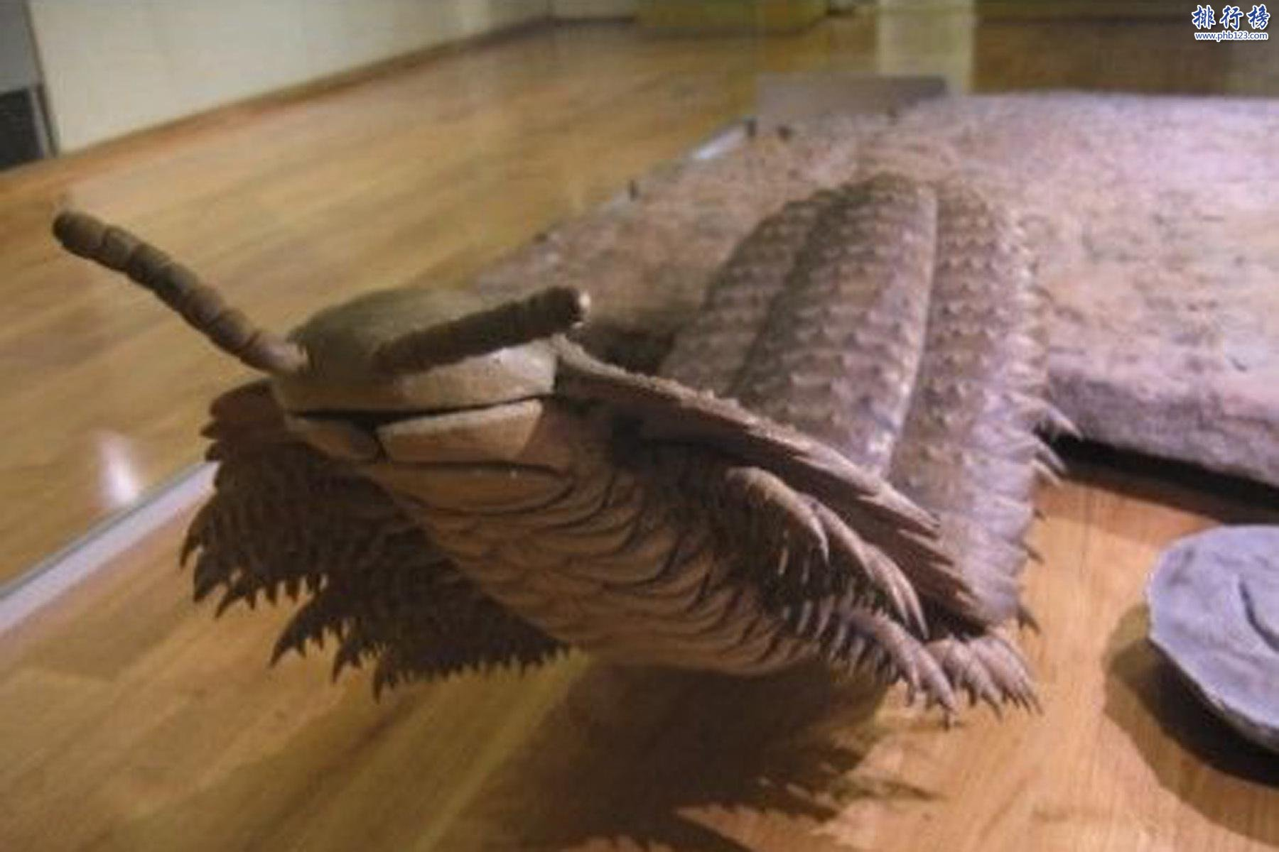 已灭绝顶级食肉动物:长2.5米的虫和与鳄鱼一样大的蜈蚣