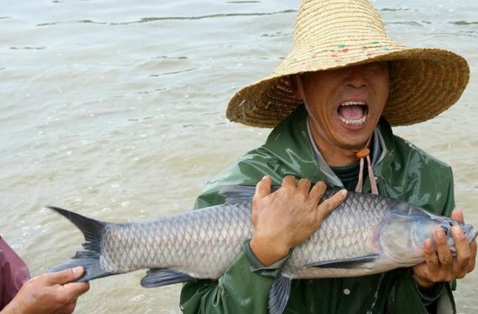 中国四大家鱼:草鱼暖胃降血压,鲢鱼最好养