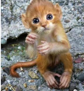 淮南四大神兽:猫猴吃小孩的脑髓太恐怖!