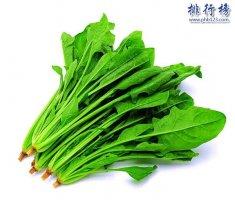 什么蔬菜壮阳效果好?壮阳蔬菜排行榜10强