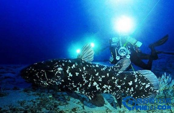世界上最古老的动物之腔棘鱼