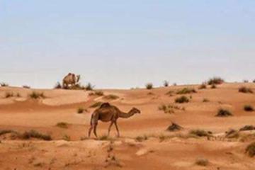世界十大最大半岛,阿拉伯第一面积322万km²