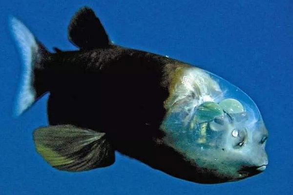 奇特的海洋生物排行榜 无需呼吸宇宙都可生存