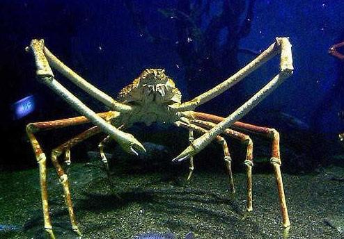 世界上最大的螃蟹:英国巨型螃蟹(长15米)