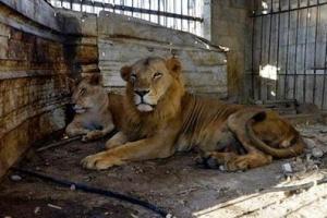 海口动物园成炼狱 十大残暴动物园排行榜