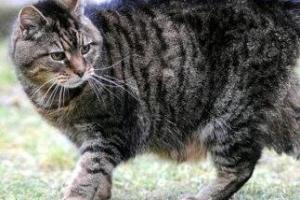 【世界上年龄最大的猫】世界上活的最久的猫