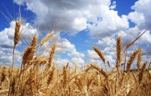 2017年全国各省粮食产量排行榜,黑龙江粮产占比排名第一